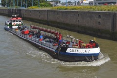 CALENDULA 7