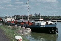 LUCANIA (1)